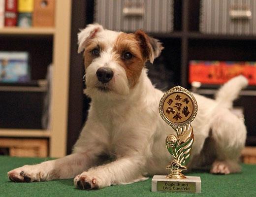 Parson Russell Terrier Begleithundprüfung Begleithund Hundesport Prüfung
