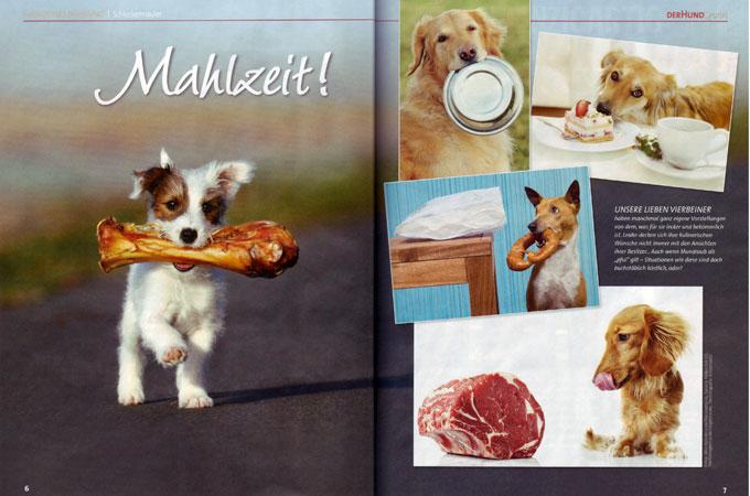 Chilli Parson Russell Terrier Zeitung Der Hund Bauernverlag