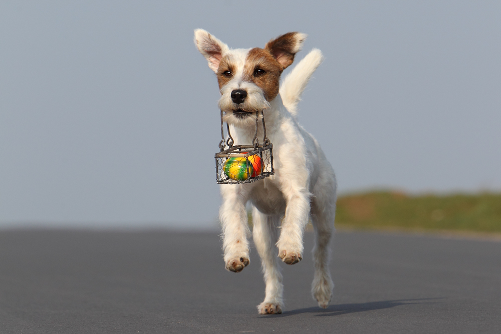 Hund Ostern Terrier Eier blauer Himmel
